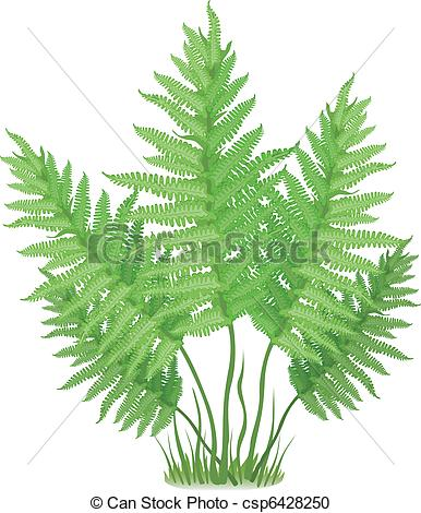 Fern clipart #17, Download drawings