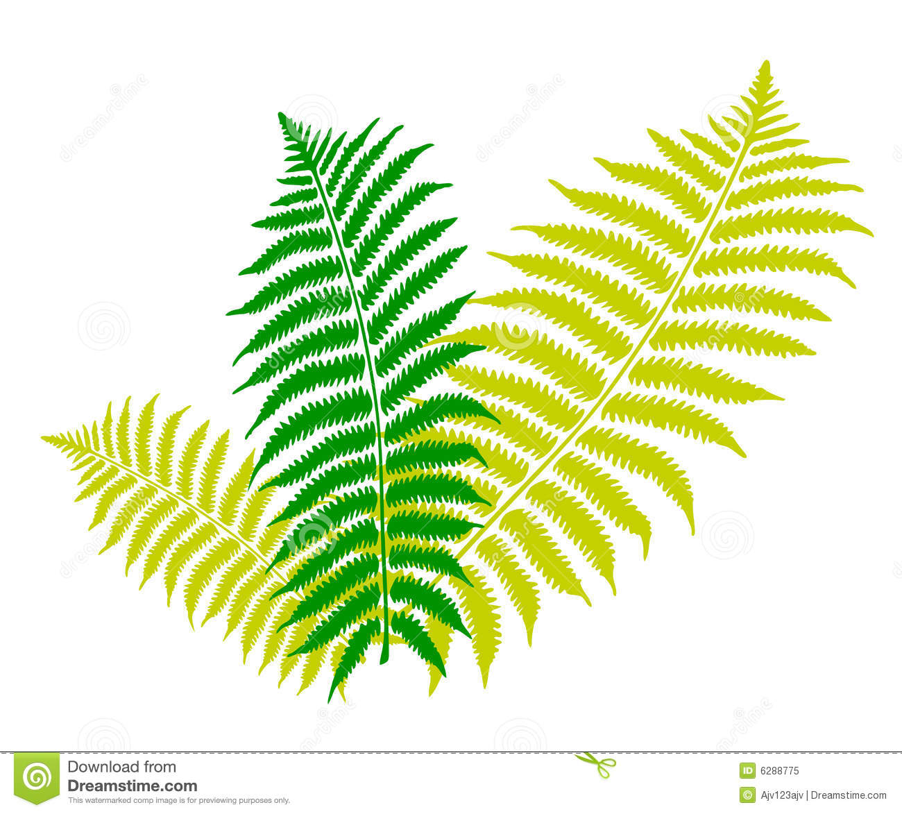Fern clipart #18, Download drawings