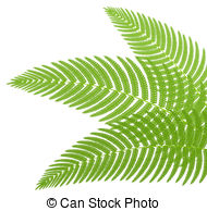 Fern clipart #20, Download drawings