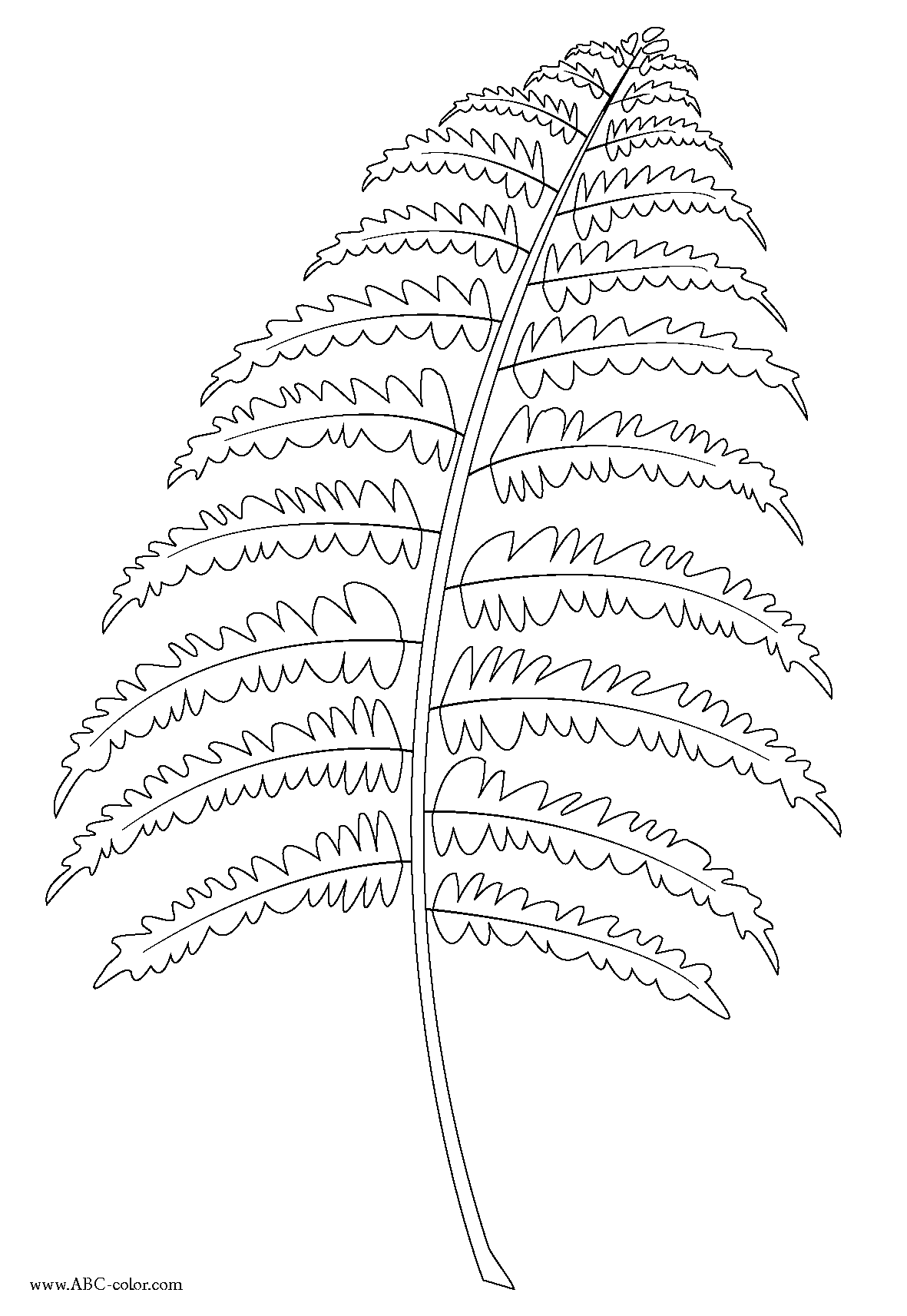 Fern coloring #3, Download drawings