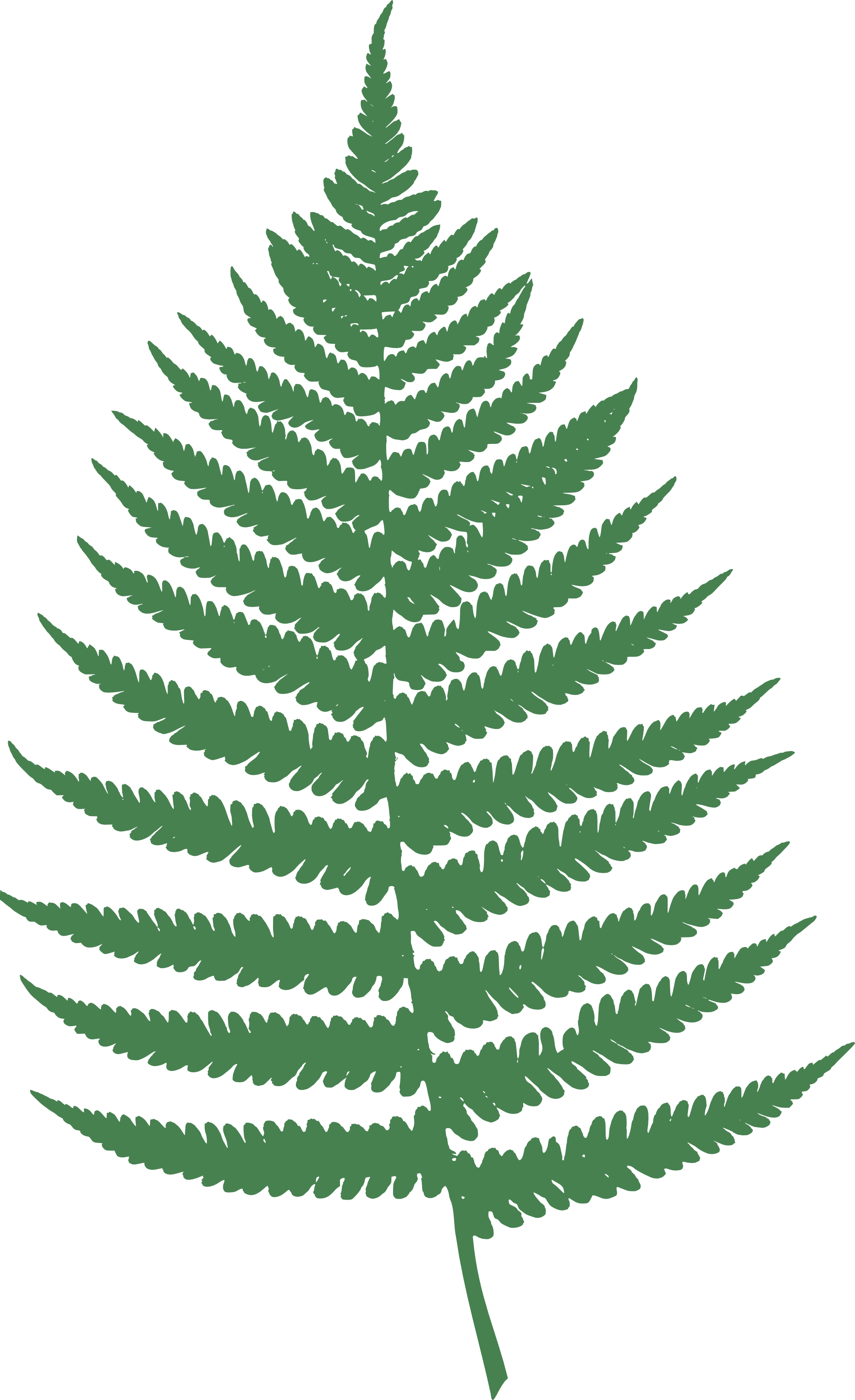 Fern svg #10, Download drawings