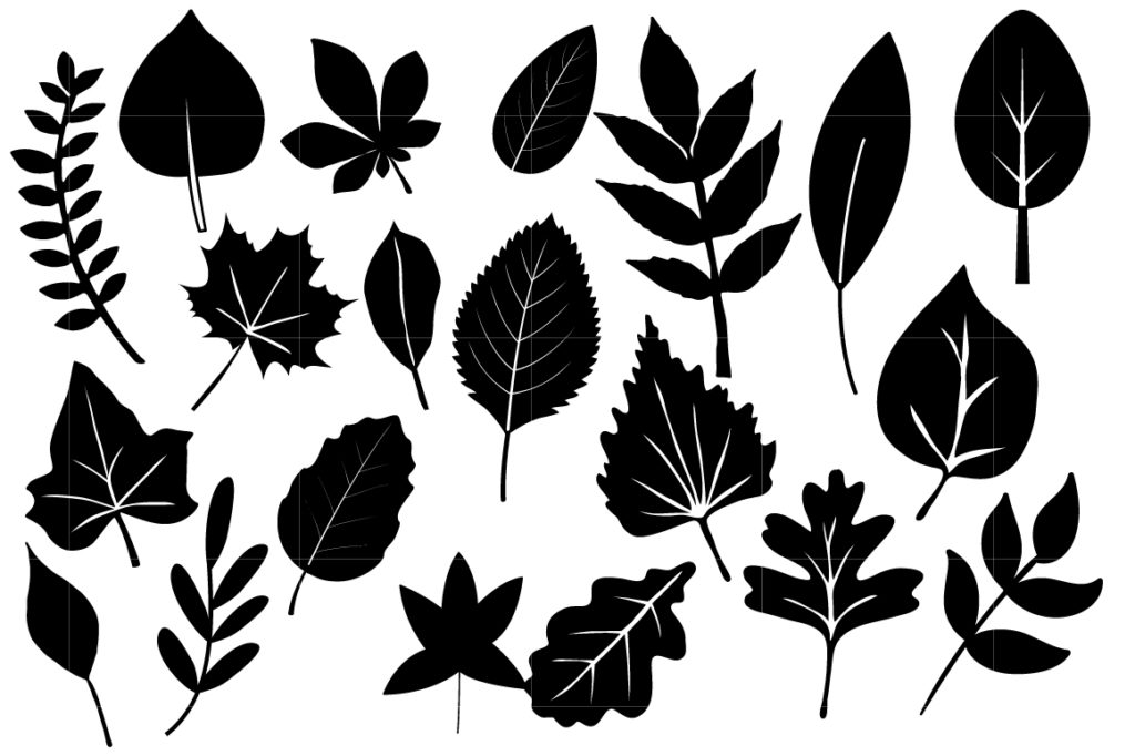 Fern svg #14, Download drawings
