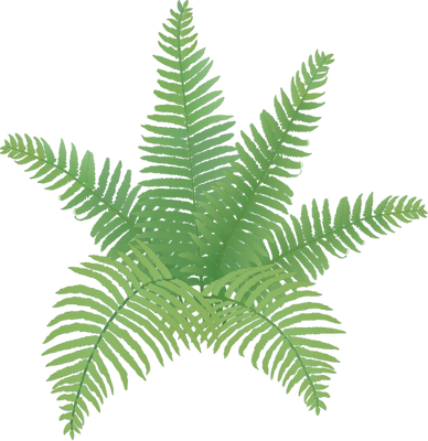 Fern svg #16, Download drawings