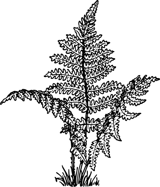 Fern svg #6, Download drawings