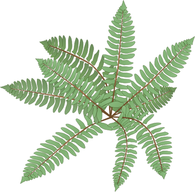 Fern svg #7, Download drawings