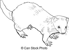 Ferret clipart #13, Download drawings