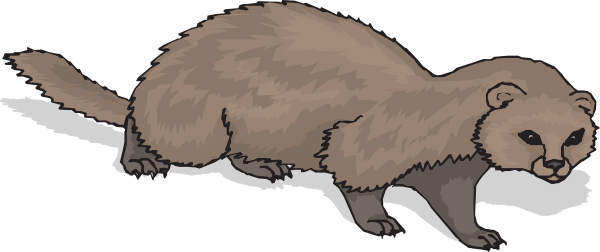 Ferret clipart #4, Download drawings