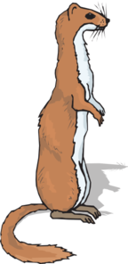 Ferret clipart #7, Download drawings