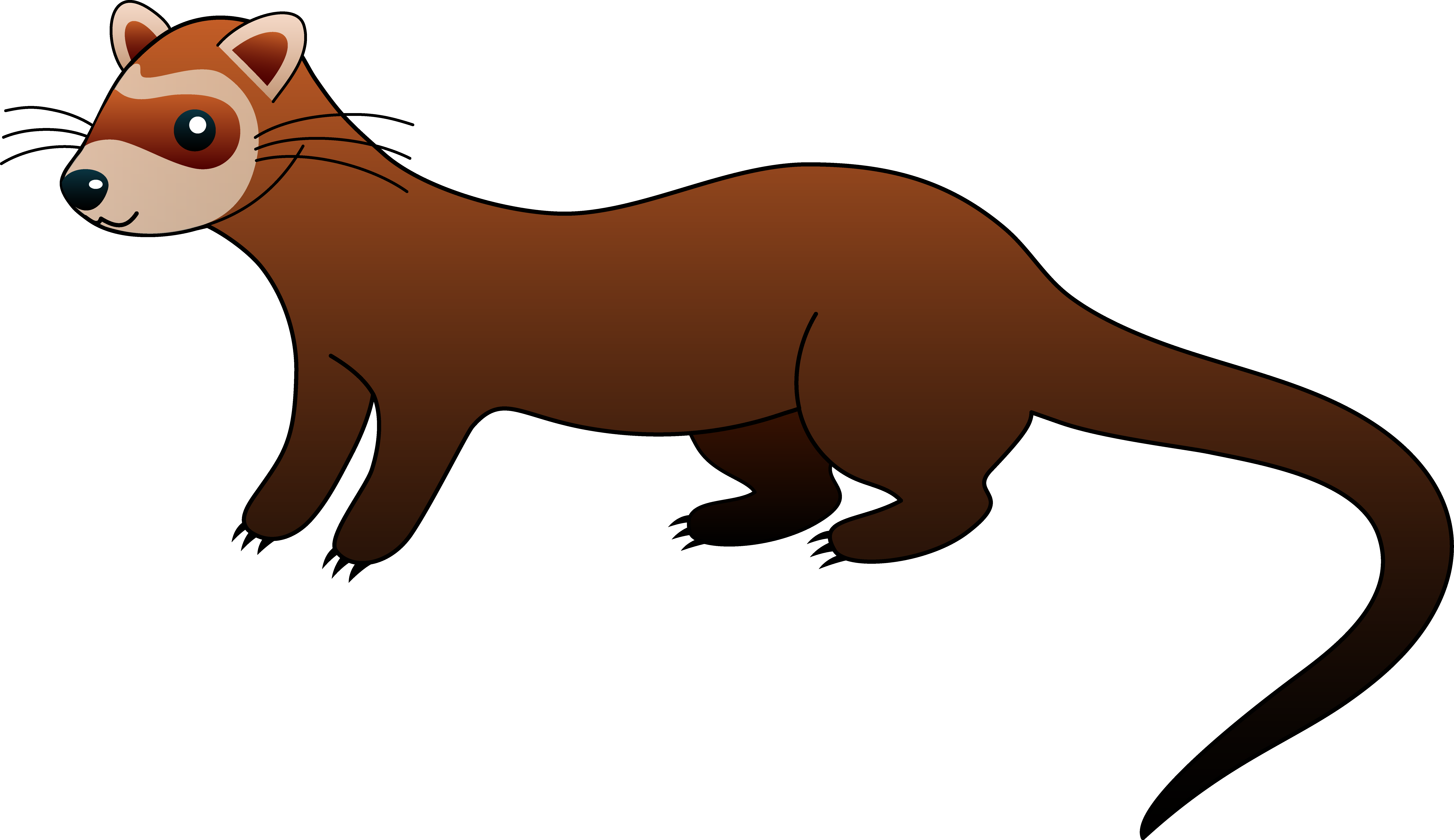 Ferret clipart #2, Download drawings