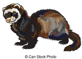 Ferret clipart #20, Download drawings