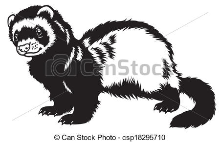 Ferret clipart #12, Download drawings