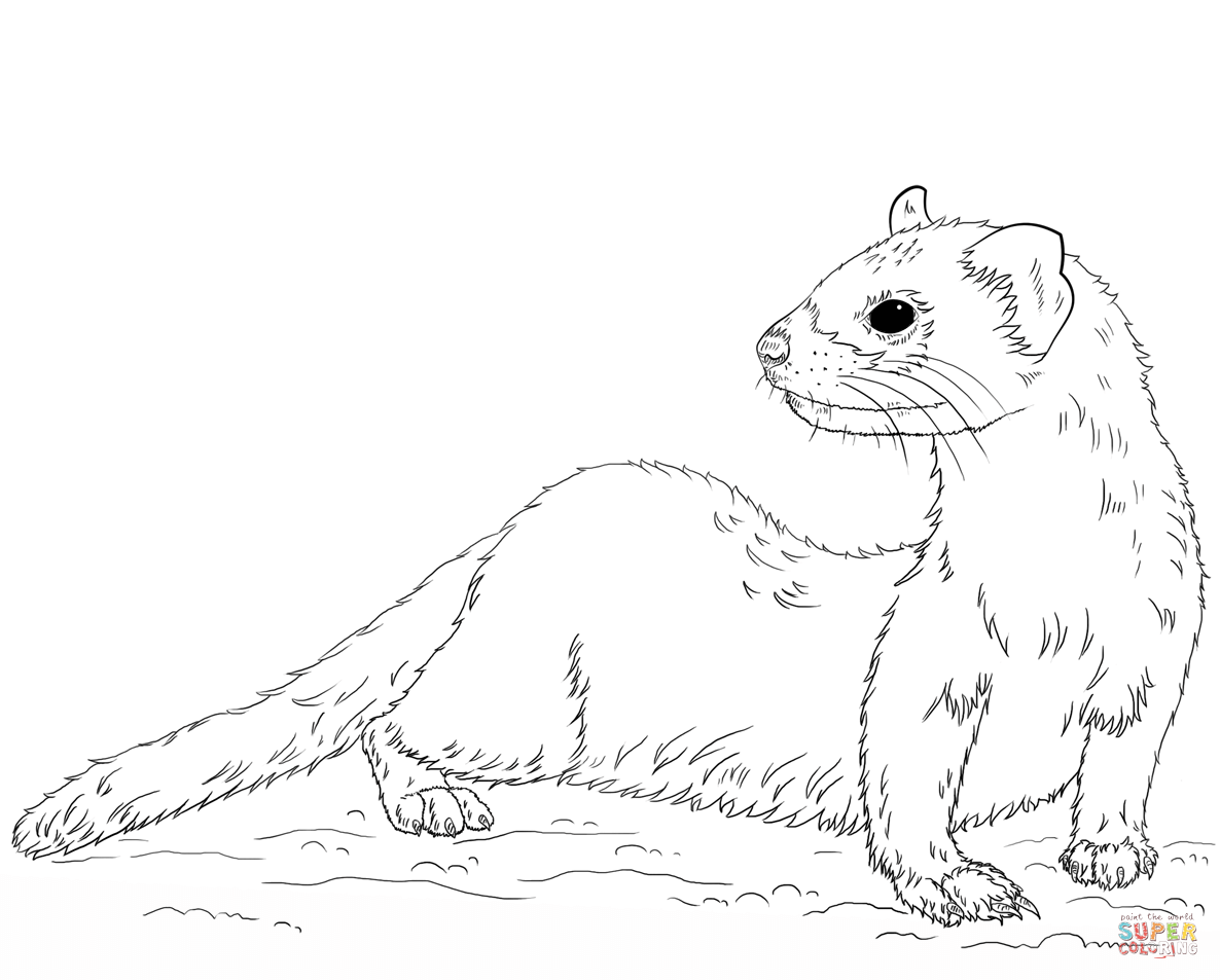 Stoat coloring #15, Download drawings