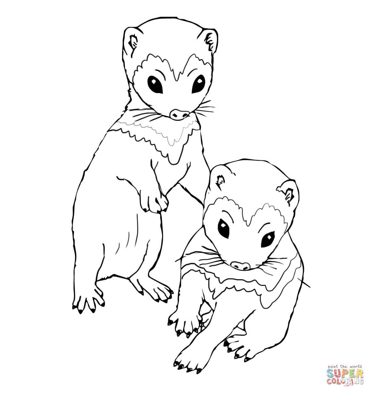 Ferret coloring #8, Download drawings