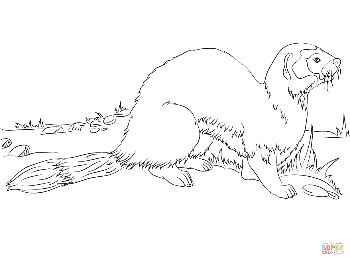 Ferret coloring #7, Download drawings