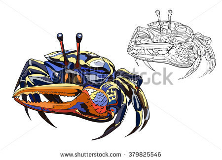 Fiddler Crab clipart #10, Download drawings
