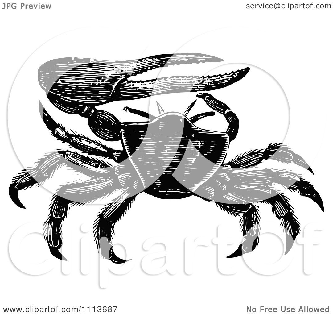 Fiddler Crab clipart #15, Download drawings