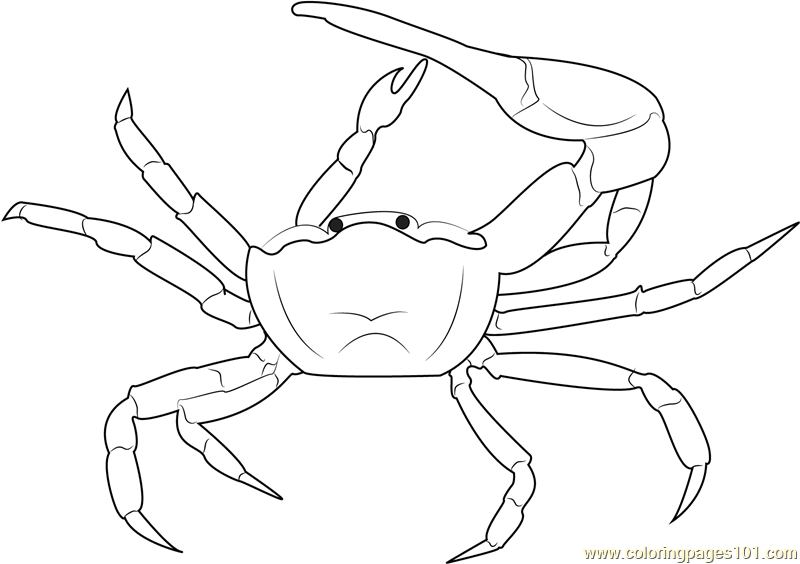 Fiddler Crab coloring #19, Download drawings