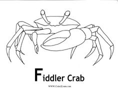 Fiddler Crab coloring #4, Download drawings