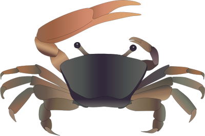 Ghost Crab svg #17, Download drawings