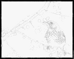 Fieldfare coloring #12, Download drawings