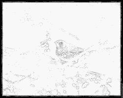 Fieldfare coloring #19, Download drawings