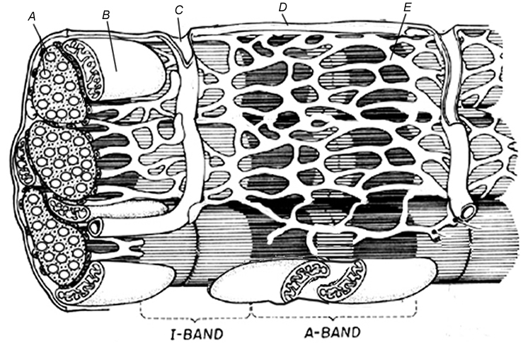 Filaments coloring #7, Download drawings