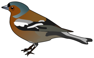 Finch clipart #14, Download drawings
