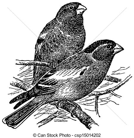 Finch clipart #6, Download drawings