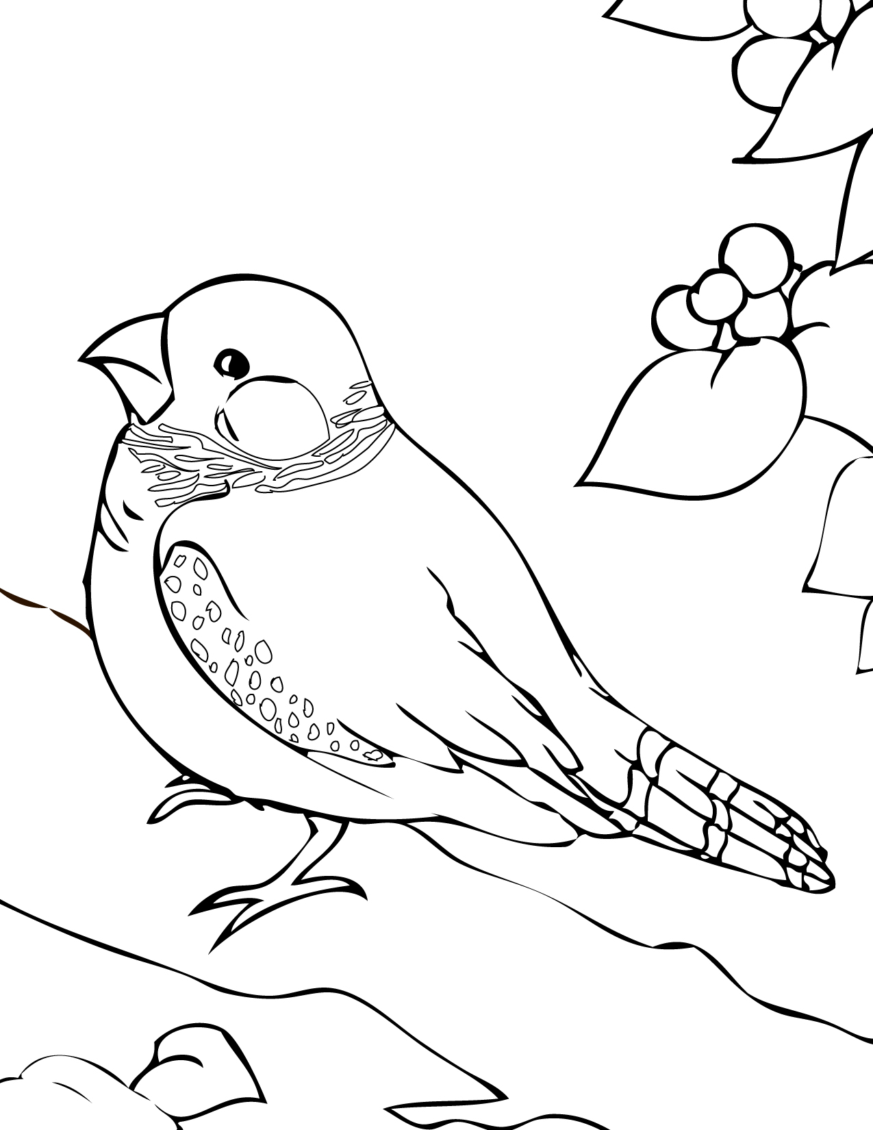 Finch coloring #16, Download drawings