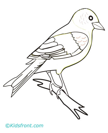 Finch coloring #1, Download drawings