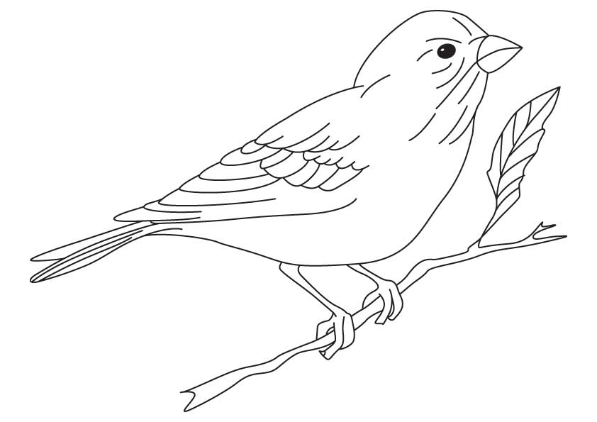 Finch coloring #3, Download drawings