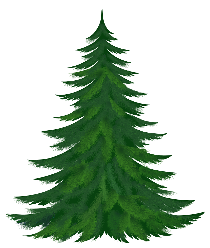Fir Tree clipart #5, Download drawings
