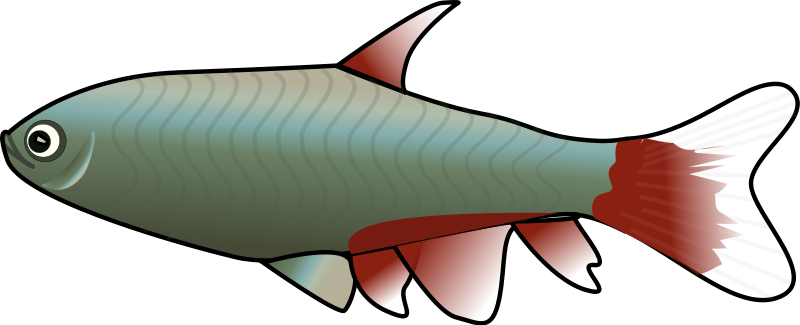 Fish clipart #6, Download drawings