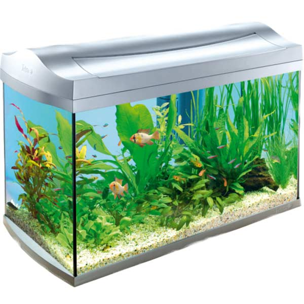 Fish Tank clipart #2, Download drawings