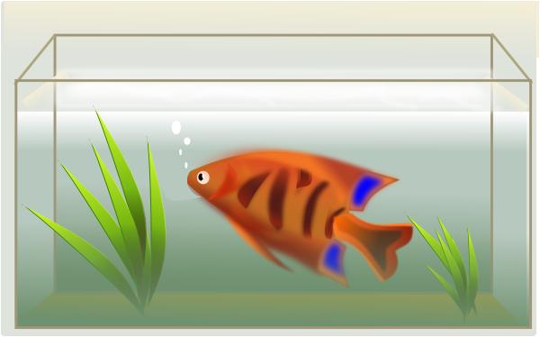 Fish Tank clipart #19, Download drawings