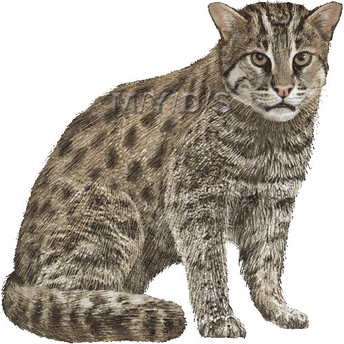 Fishing Cat clipart #17, Download drawings