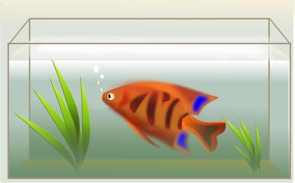Fishtank clipart #9, Download drawings