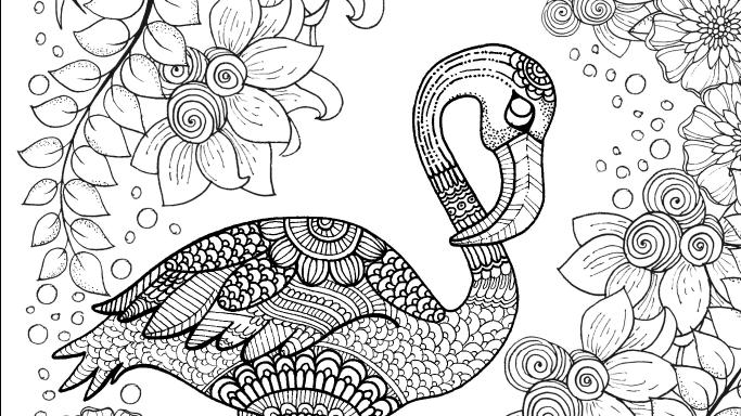 Flamingo coloring #7, Download drawings