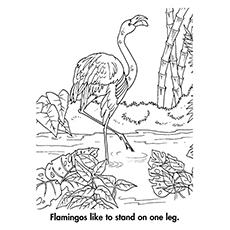 Flamingo coloring #6, Download drawings