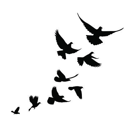 Flock Of Birds clipart #20, Download drawings