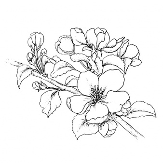 Floral Vector coloring #20, Download drawings