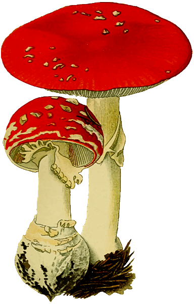 Fly Agaric clipart #10, Download drawings