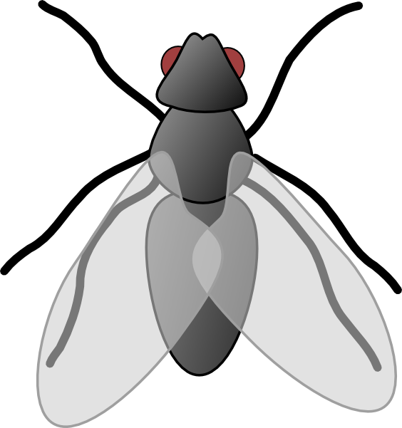 Fly clipart #5, Download drawings