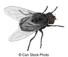 Fly clipart #12, Download drawings