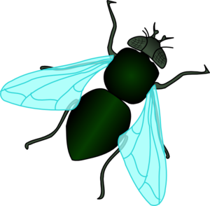Fly clipart #11, Download drawings