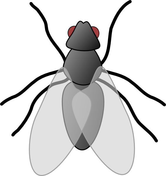 Fly clipart #14, Download drawings