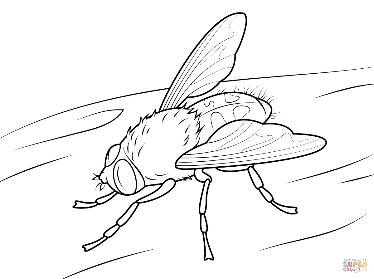 Fly coloring #10, Download drawings