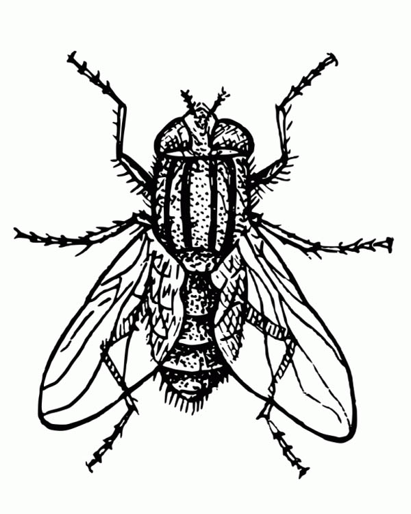 Fly coloring #2, Download drawings