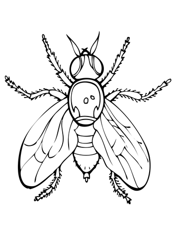 Fly coloring #5, Download drawings