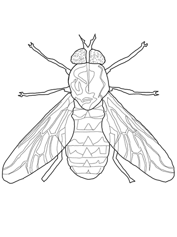 Fly coloring #4, Download drawings